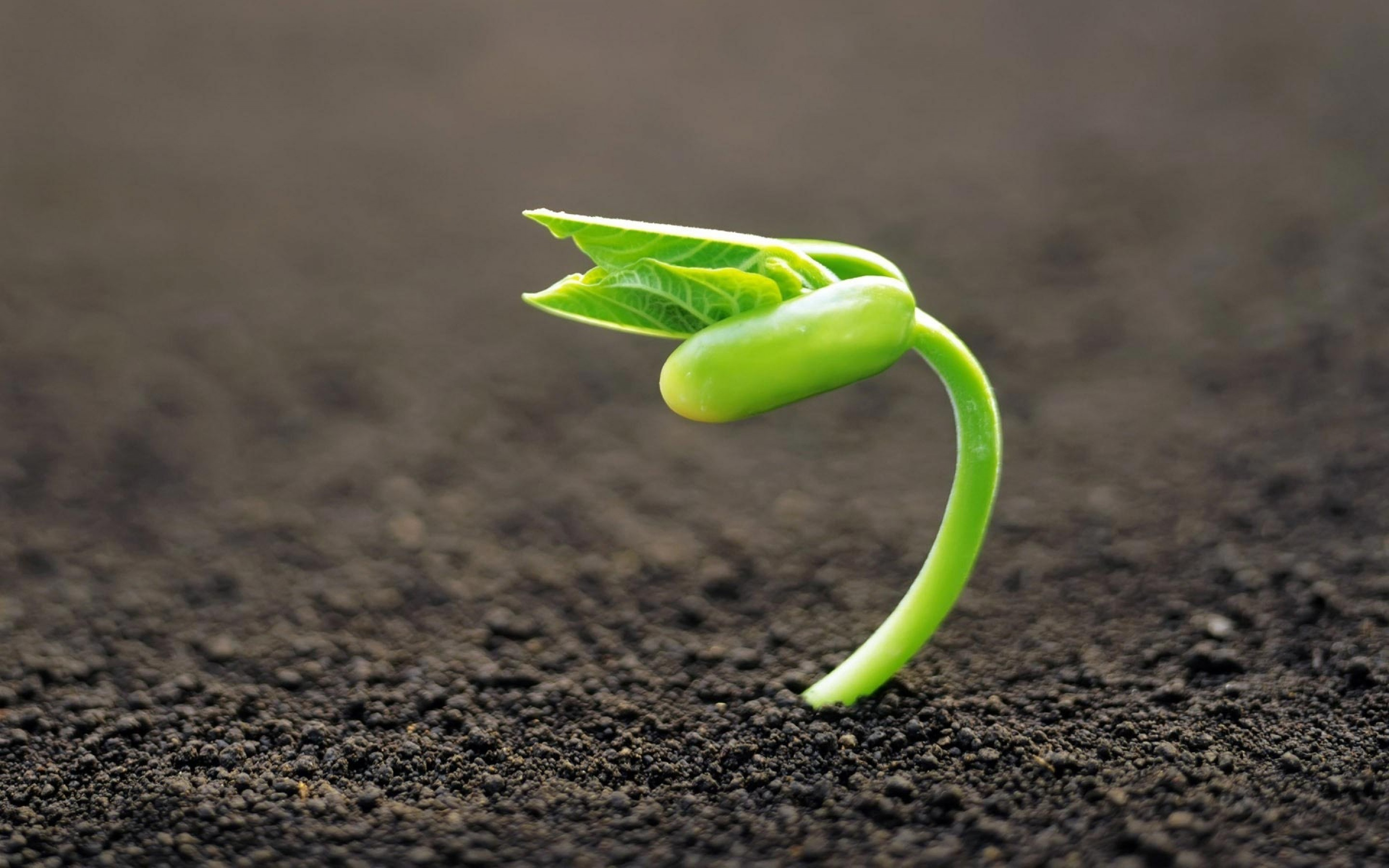 strong-vitality-germination-plant-nature-1800x2880